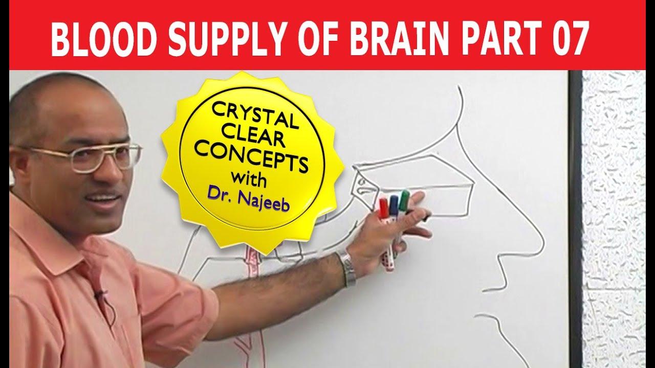Blood Supply To Brain Neuroanatomy Part 711 Youtube