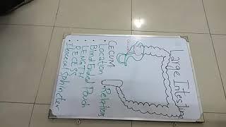 Cecum .Large intestine Part 1
