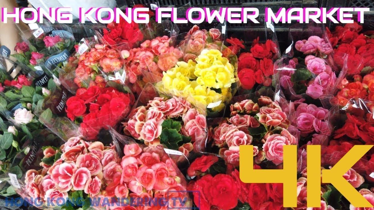 Ultra Hd 4k Flower Market Hong Kong Mong Kok Flower Market
