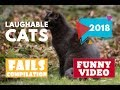 Laughable cats compilation #401 | 2018 ★ 7 second of happiness FUNNY Video 😂