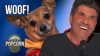 3 DOG AUDITIONS THE JUDGES LOVED On America's Got Talent 2021