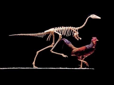 Come costruire un dinosauro. La scienza di Jurassic park e ...