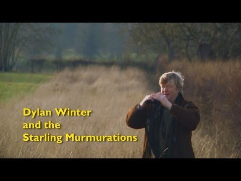 Dylan Winter and the Starling Murmurations