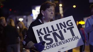 Killing To Conserve? Trophy Raises Difficult Questions