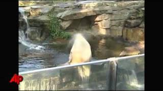 Expert: German Celebrity Polar Bear Knut Drowned