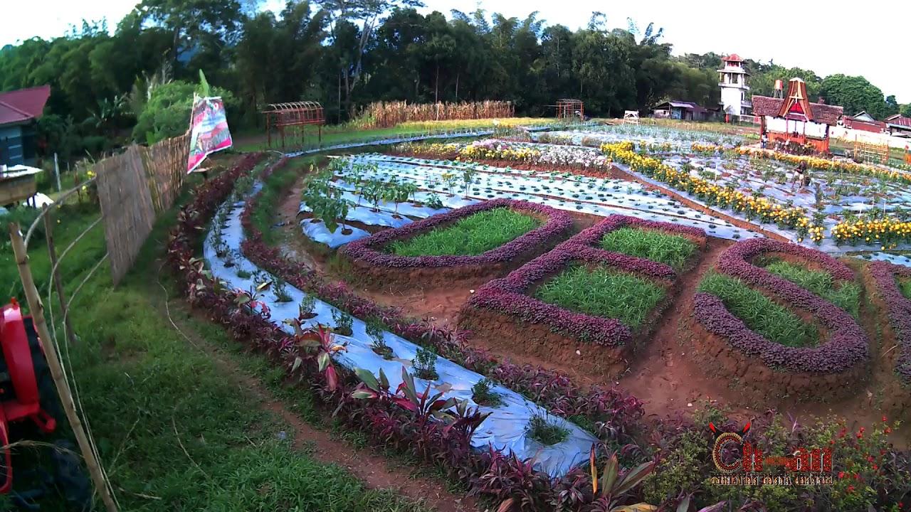 Wisata Taman Bunga dan Sayur di Bua, Toraja Utara - YouTube
