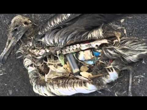 Plastic Oceans: The Great Pacific Garbage Patch