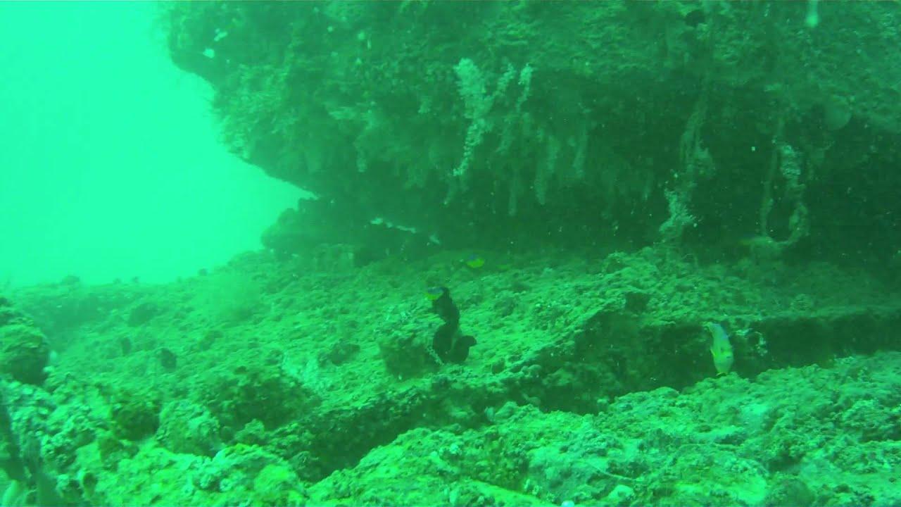 Scuba Diving Venice Florida Wwii Tank Artificial Reef