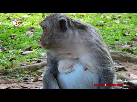 #POWER ANIMALS# # JANE # Jane very tired during pregnant. .