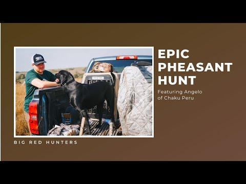 Epic Pheasant Hunt