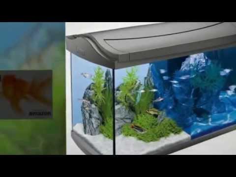 Aquarium meine goldfische doovi for Aquarium goldfische