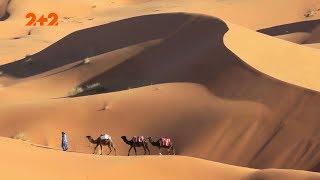 Пустелі рятують: енергетичну та продовольчу кризу світу подолано?