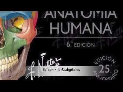 DESCARGAR Netter Atlas de anatomia humana (PDF/googledrive