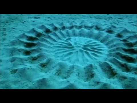 disegni sulla sabbia pesce palla youtube