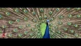 Pavo Real - Museo Dolores Olmedo thumbnail