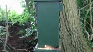 Squirrel Feeder And Hide