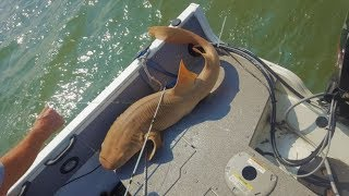 Download Video 2018 Beaufort SC saltwater fishing highlights - BULL REDS, BIG Shark, and more! MP3 3GP MP4