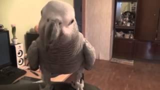 Попугай поет красиво и говорит! Посмотрите