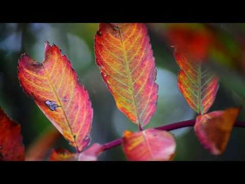 Celtic Woman- Over the Rainbow