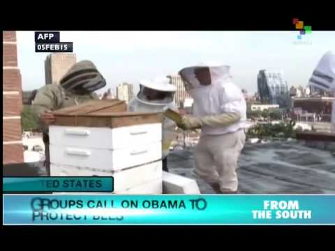 US: Environmentalists call on Obama to save honey bees