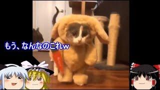 【おもしろゆっくり】猫好きによる、猫好きのための猫特集。