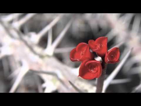 Orazio, Carpe Diem (asclepiadeo maggiore - pronuntia restituta) - mainikka