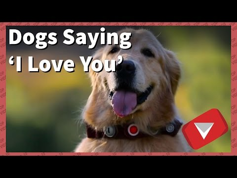 Dogs Saying I Love You Compilation [2017] (TOP 10 VIDEOS)