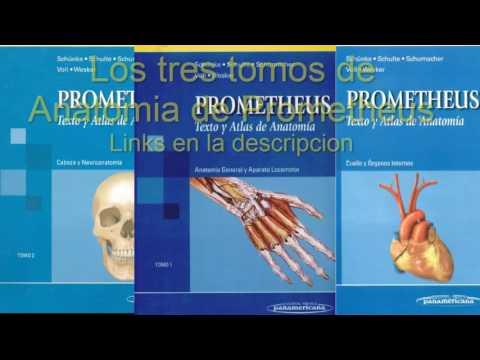 libros-de-texto-y-atlas-de-anatomia-de-prometheus-en-pdf
