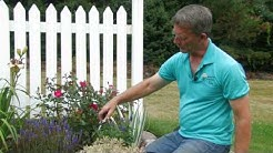 Perennial Rejuvenation: Rose-Hill Gardens Video Series Episode Six