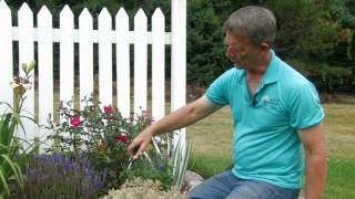 Perennial Rejuvenation: Rose-Hill Gardens Video Series Episode Six