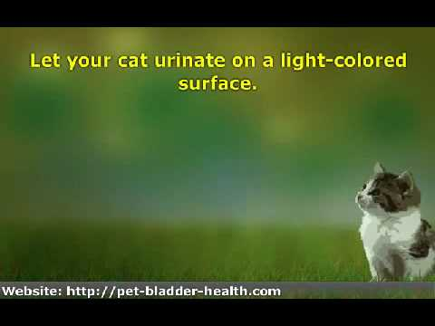 8 ways to tell if your cat has a urinary tract infection youtube. Black Bedroom Furniture Sets. Home Design Ideas