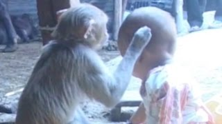 Cute Friendship Between A Monkey And A Baby