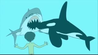 Orca Rescue