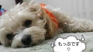 もっちゃんのスライド+お友だちメルちゃんとの動画。
