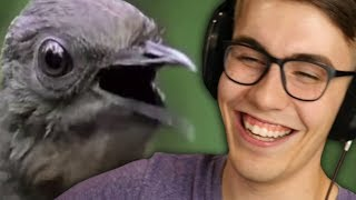 MAKE ME LAUGH IN 30 SECONDS OR LESS - YouTube Haiku