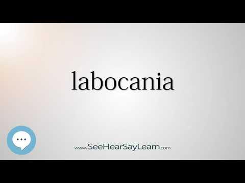 labocania - Dinosaur Names 🔊☄