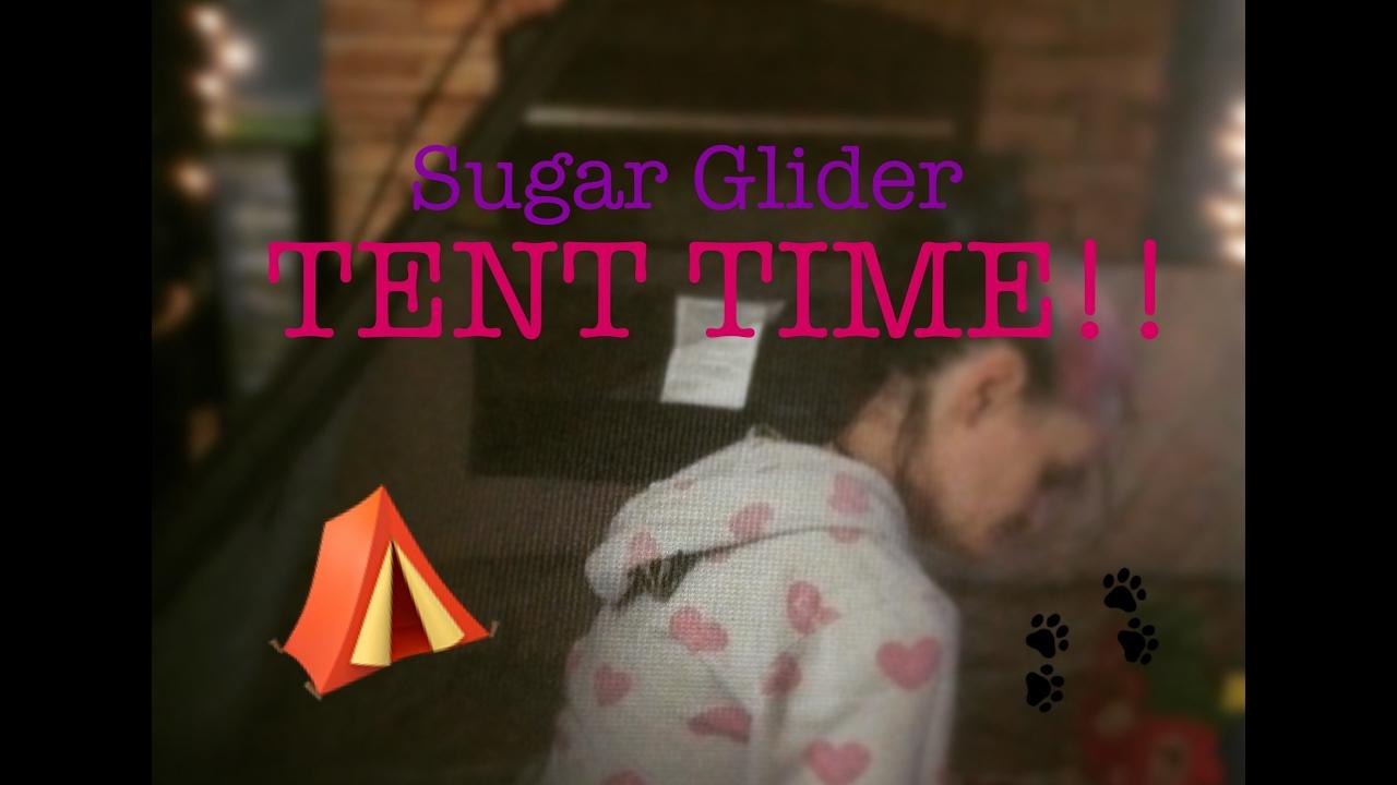 56 Sugar Glider Bonding Tent Glidergossip & Play Tent For Sugar Gliders - Best Tent 2018