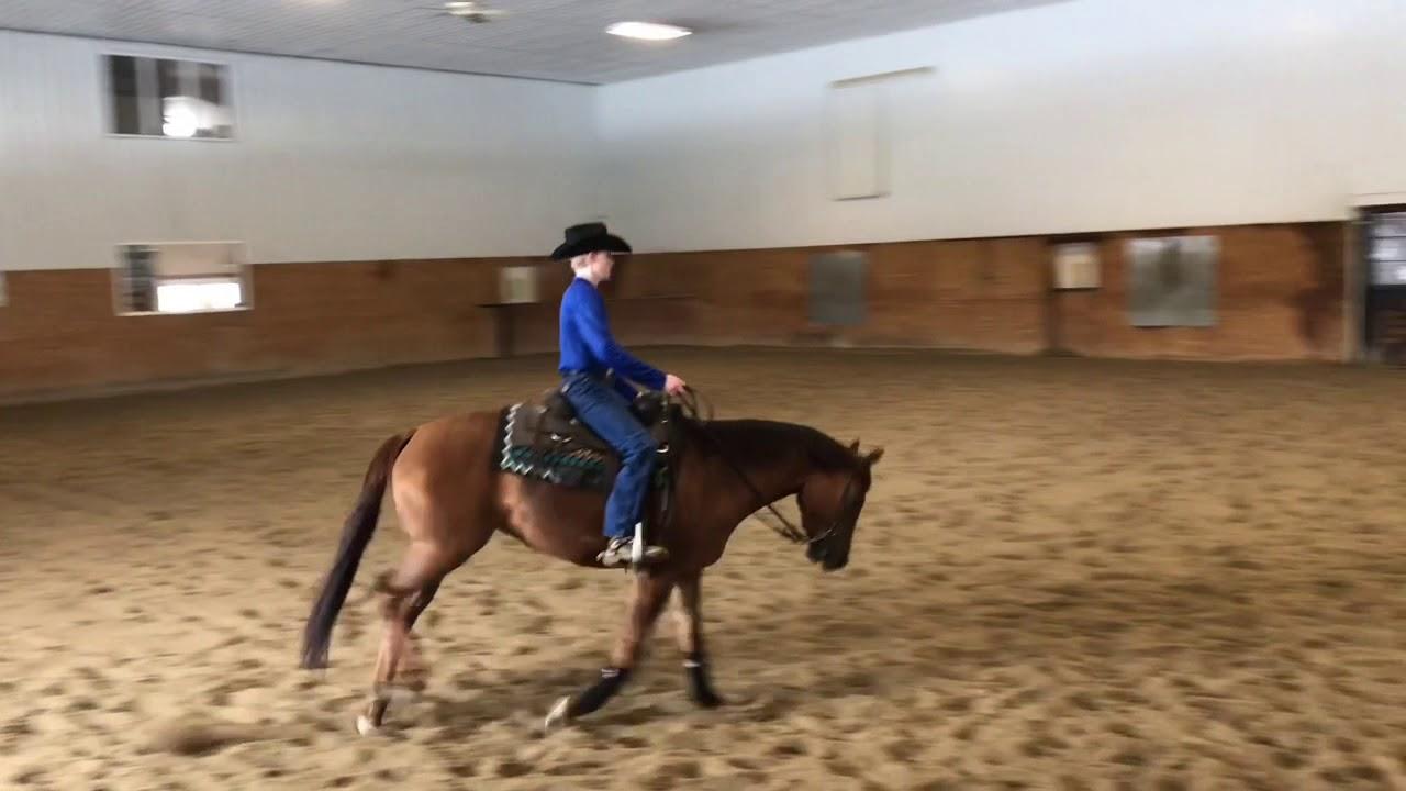 Sold Sheza Fly Thang Lead Change Islide Performance Horses