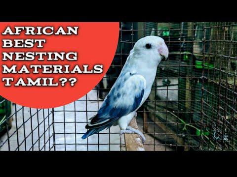 African Love Birds Best Nesting Materials Tamil|best Materials For Breeding African Love Birds Tamil