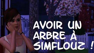 [SIMS 3] Comment avoir un arbre à Simflouz !