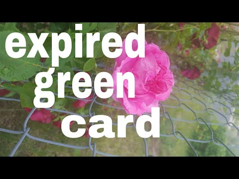 Expired Green Card[]passport Stamp[]2019ngreer