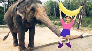 도전! 라임의 코끼리에게 바나나 주기! | 베트남 푸꾸옥 빈오아시스 라임 가족여행 phuquoc  | LimeTube