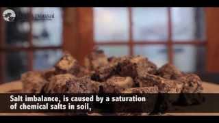 29) Bonsai Fertilising and Bonsai Feeding and Introduction