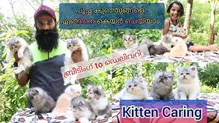 PERSIAN CAT ബ്രീടിംഗ് - ഡെലിവറി മുതൽ Kitten കാരിംഗ് Vere, MALAYALAM. Persian Cats Farm kerala.