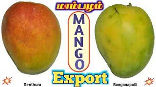 mango export business| new business ideas in Tamil| மாம்பழம் ஏற்றுமதி | Gokul Export
