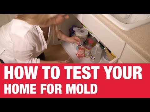 How To Test Your Home For Mold