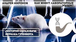 Андрей Миронов  – Как живут лабораторные мыши?