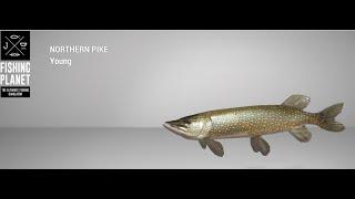 Fishing Planet Lesni Vila Fishery Northern Pike Spin
