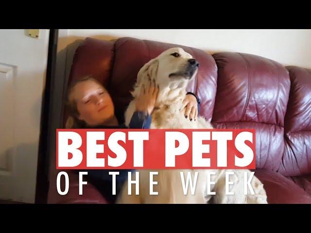 Best Pets of the Week | September 2018 Week 2