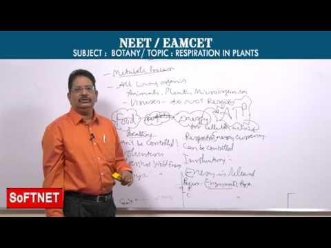 BOTANY || RESPIRATION IN PLANS - P1 || Ravi kumar